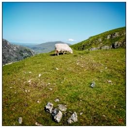 Snowdonia Mountain
